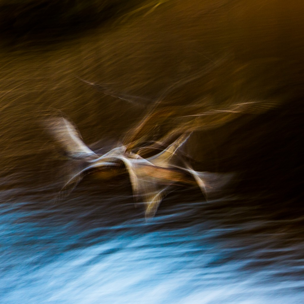 Wings over blue water